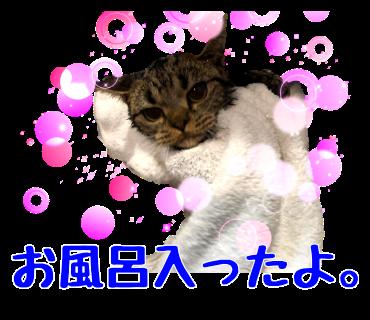 お風呂入ったよ
